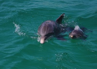 Dolphin with baby.